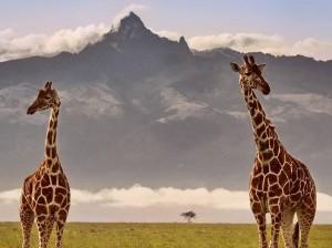 RC Kenya Trek